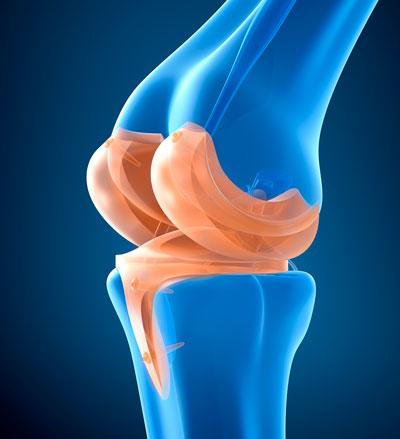 Amortiguación de la rodilla